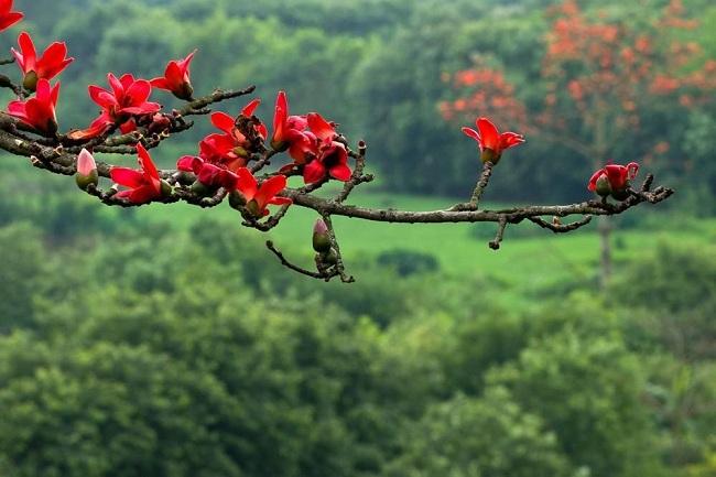 Chùm thơ của tác giả Vi Thùy Linh