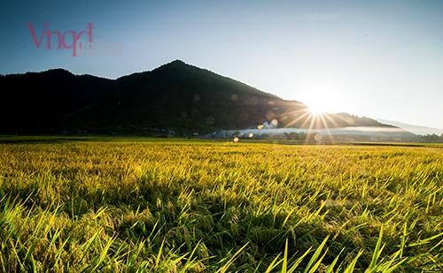 Mùa vàng xứ Tuyên
