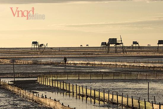 Bãi nuôi ngao được quây trên vùng đất bùn pha cát thoai thoải trải dài Khi thủy triều xuống, những cánh đồng ngao ngập dưới nước loang loáng, ôm lấy những chòi canh cao lớn tạo nên khung cảnh