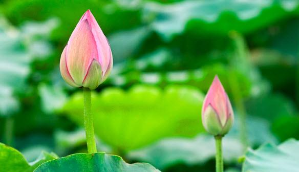 Niềm thơ Nguyễn Anh Quốc