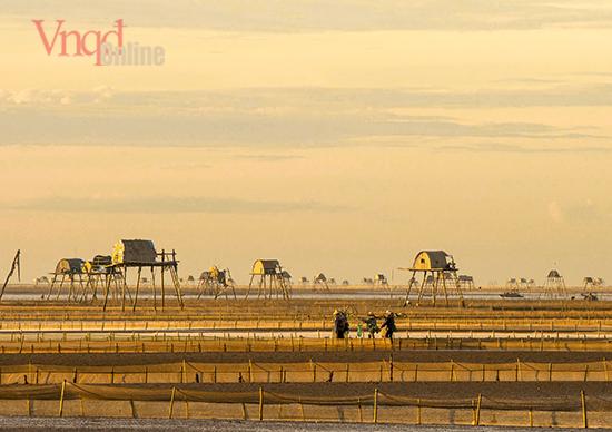 Đồng Châu không phải bãi biển đẹp để khai thác du lịch nhưng lại là nơi tuyệt vời để canh tác và nuôi trồng ngao Bóng dáng những người phụ nữ cào ngao trải dài trên cánh đồng trở thành nguồn c