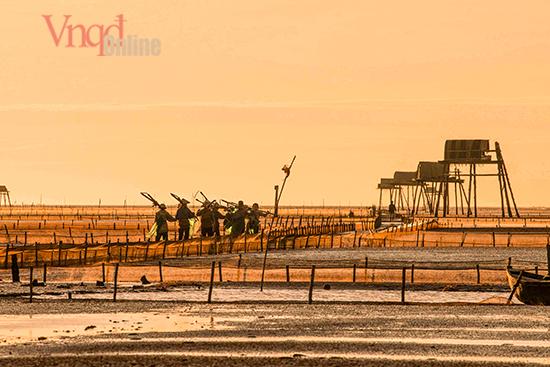 Người dân sáng sớm đã đi ra đồng bắt Ngao mang ra chợ bán trước khi thủy triều lên