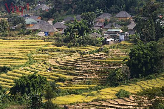 Bản Lao Chải 2 với những mái nhà truyền thống của người Hà Nhì thấp thoáng trong ngày mùa