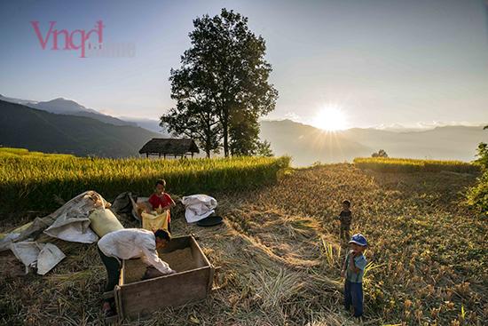 Thu hoạch lúa ở Choản Thèn