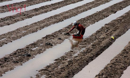 18 nước rút người dân chuẩn bị cho vụ gieo trồng